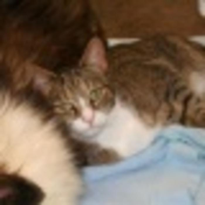 Whiskers </br> Greeter/Surgery Recovery photo